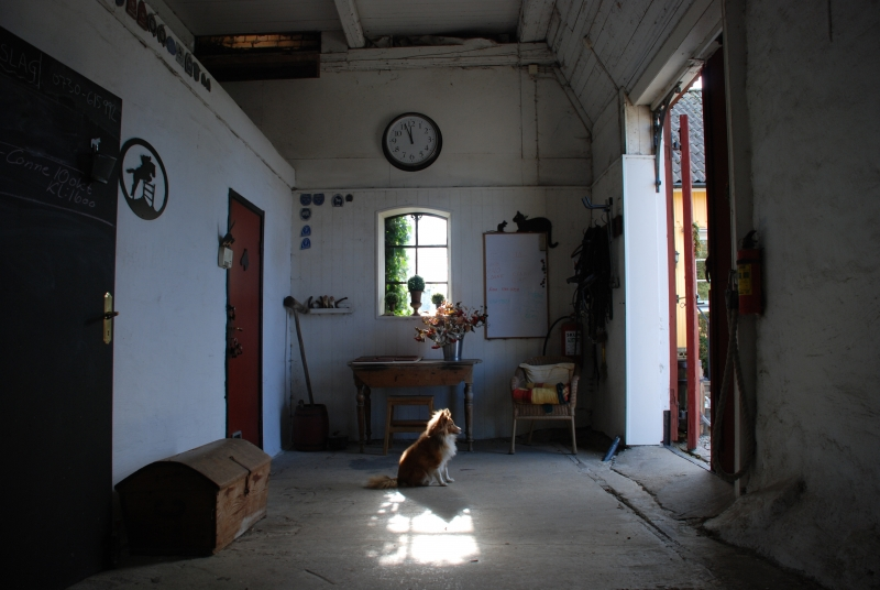 1670390-an-old-dog-who-sits-in-the-stables-waiting-for-his-mistress